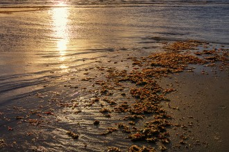 praia de piranji_carlabelke (9)